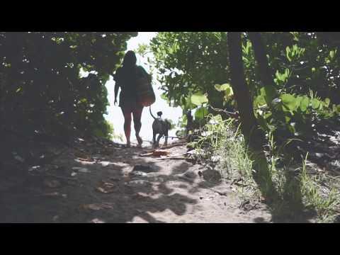 Great Dane Puppy Beach Day!     DJI Osmo Action    Jupiter Florida Dog Beach