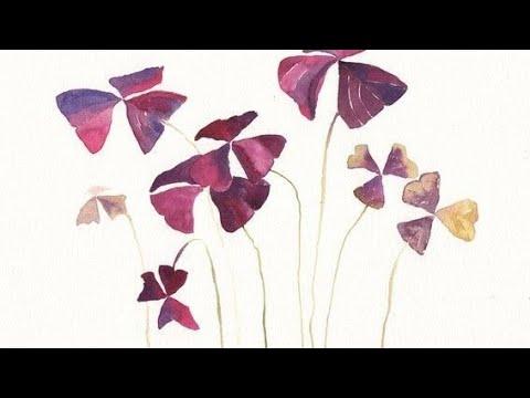 OXALIS | Uyku çiçeği, süs yoncası nasıl çoğaltılır. Uyku  çiçeği bakımı.