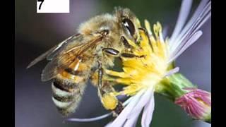 Видеотест Изучаем голоса насекомых