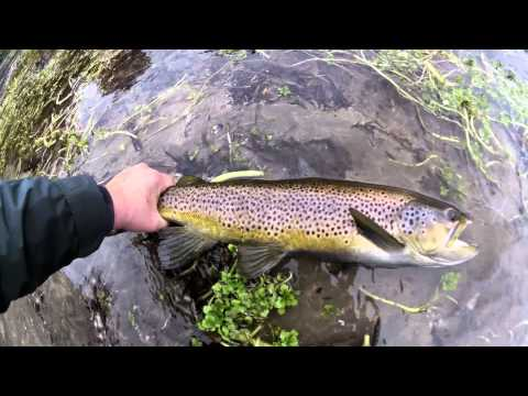 Fin Hooked Brown Trout Waitahanui