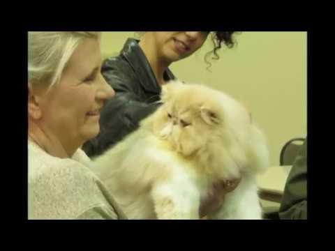 CFA Malibu Cat Show 2019