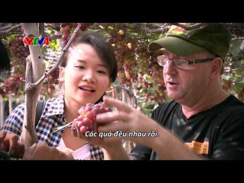 Ninh Thuận - Cừu và Nho