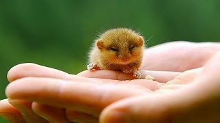 Hamsters - Cute Hamsters Doing Funny Things