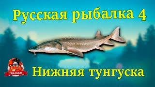 Русская рыбалка 4 Нижняя тунгуска Осётр и Стерлядь
