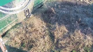 """Первый выход в вольер. Видео: национальный парк """"Земля леопарда"""""""