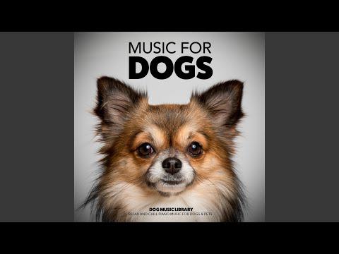 Chihuahua Music