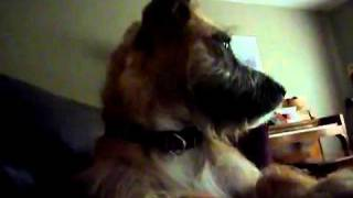 Silly Ruby, The Border Terrier   Youtube