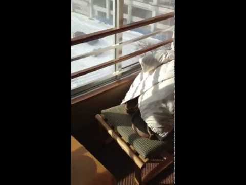 鳴子ホテル 13階客室2