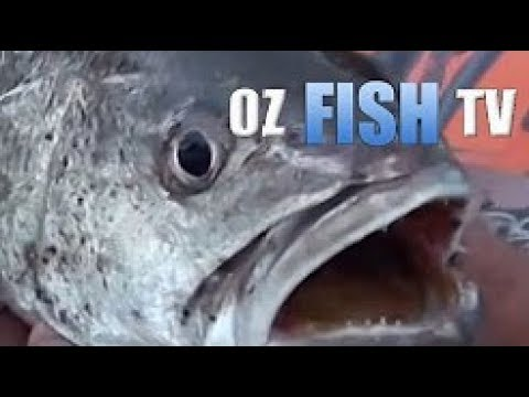 Oz Fish TV - Landbased Mulloway in Melbourne
