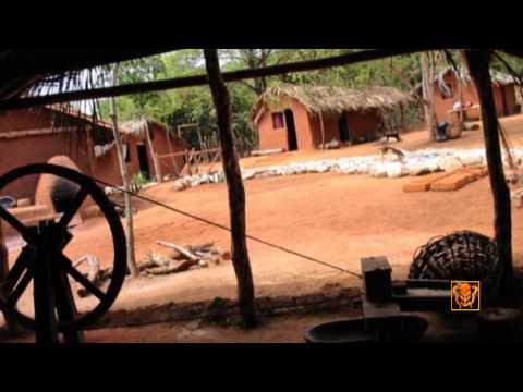 Baron Amazon Episode 4 Portugues HD  Wildlife International Films