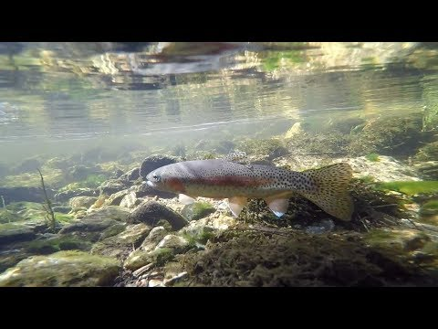 Creek Fishing At Sequoia National Forest Part 2