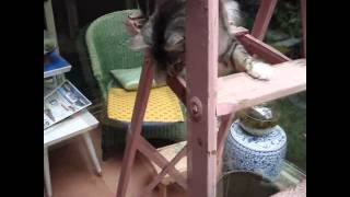 Cat on the ladder
