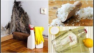 집 안의 눅눅함을 없애는 5가지 효과적인 방법