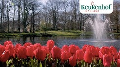 Enjoy this new video of our beautiful park!🌷- Keukenhof Virtually Open
