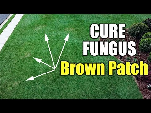 Lawn Fungus Cure - Brown Patch and Dollar Spot