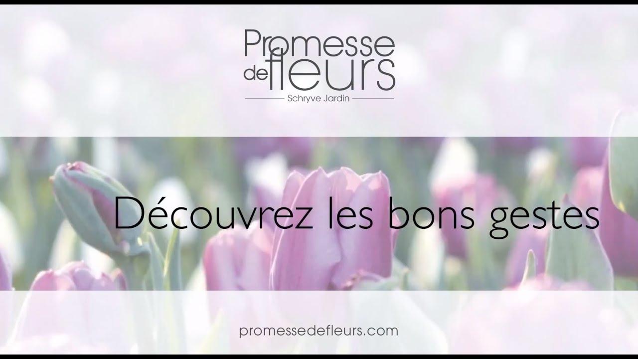 promesse de fleurs vid os conseil jardinage pour