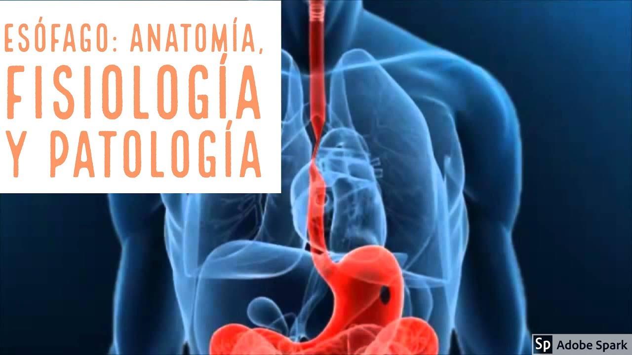 Curso CTO: Esofago anatomia, fisiologia y anomalias del desarrollo ...