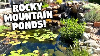 A Dream *POND WITH A MOUNTAIN VIEW*!