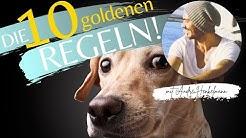 Die 10 goldenen Regeln der Hundeerziehung! Profi-Tipps!