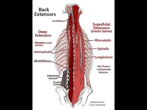 hqdefault - Chronic Back Pain Studies