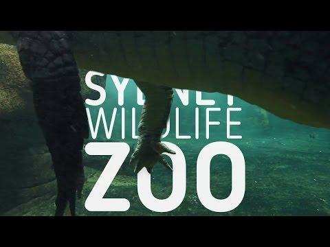 WILD LIFE Sydney ZOO - amazing animals!