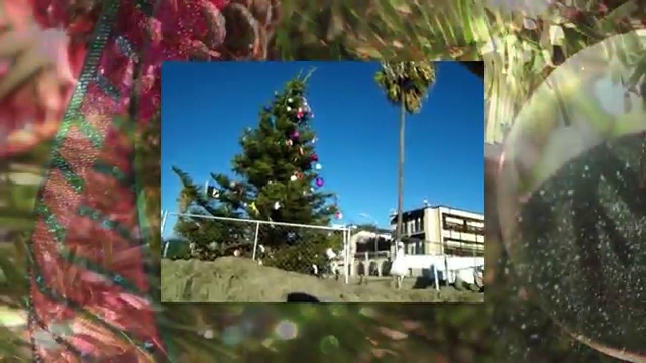 OB Christmas Tree - Coastal San Diego Rentals - YouTube