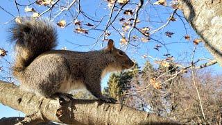 Liv the Squirrel visits Mala and Esmae's yard
