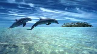 Download ♫ Dolphin dreams ♫ Melody oceans ♫ Zen and Relaxation ♫ Mp3 and Videos