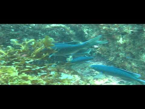 Scuba Dive @ Casino Point, Catalina Island