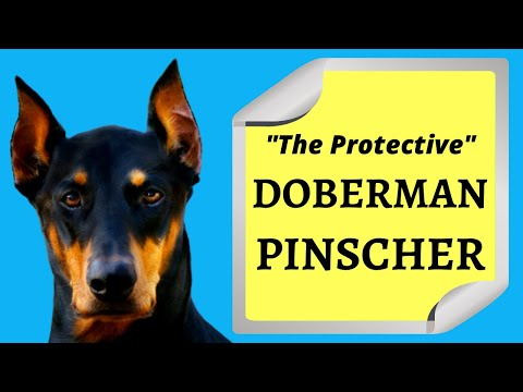 Doberman Pinscher: The Best Guard Dog For Your Family
