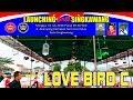 Kontes Burung Love Bird C Launching Bnr Singkawang  Mp3 - Mp4 Download