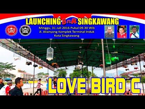Kontes Burung Love Bird C | Launching BnR Singkawang