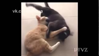Смешное видео! Приколы про животных и людей!