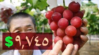 أغلى ١٠ أنواع فاكهة في العالم