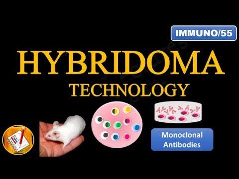 Hybridoma Technology: Production of Monoclonal Antibodies (FL-Immuno/55)