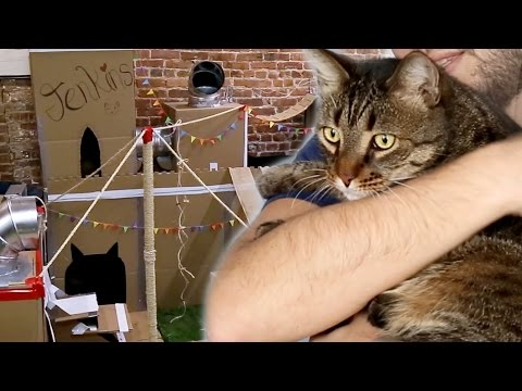 We Built The World's Greatest Cat Fort