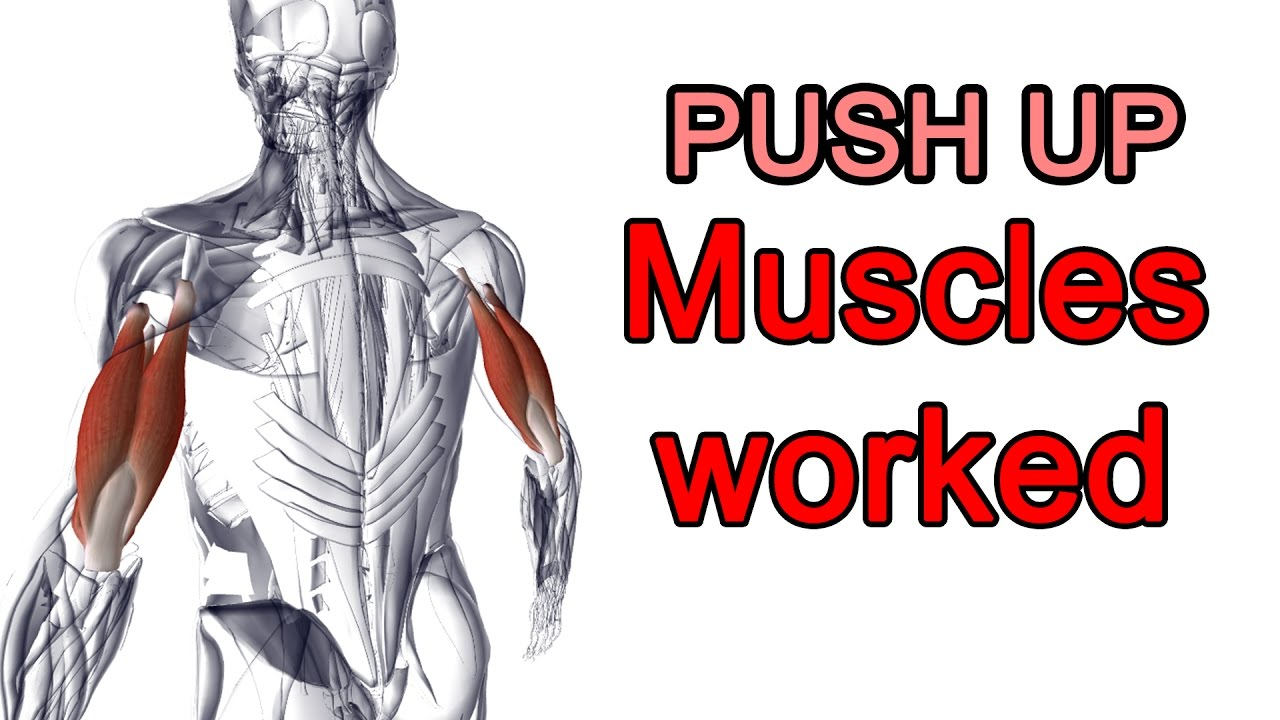 Push up DOES NOT build chest !!! [Push up No.1] - YouTube