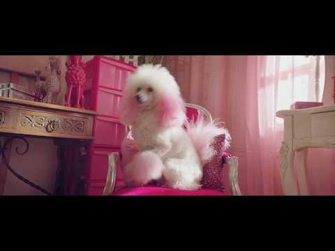 Dog Grooming with Daniela Foreshaw | O2 Custom Plans
