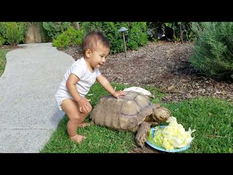 Baby Walker Tortoise Energy Efficient, Green, Zero Carbon Footprint and income equality certified