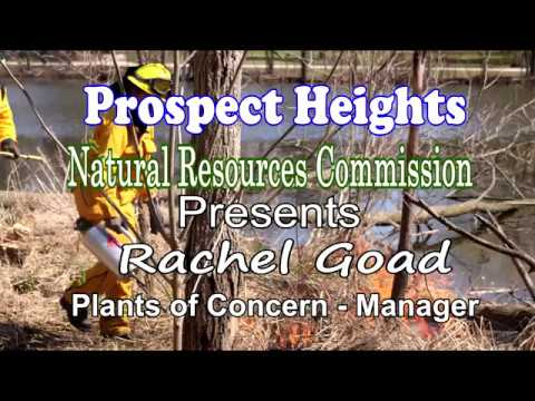 Prospect Heights Natural Resources Commission