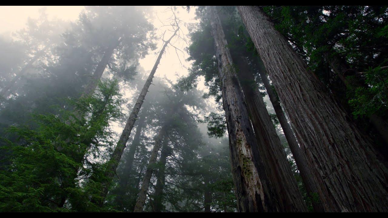paisajes del parque nacional redwood k fps ultra hd p