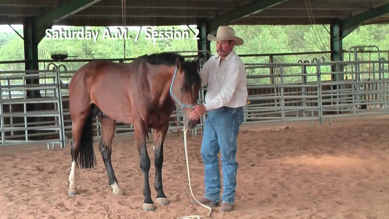 R Whitaker Horse Trainer