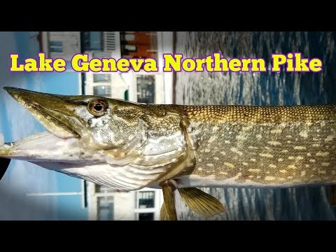 Northern Pike Lake Geneva WI