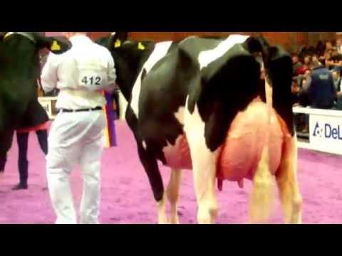 Junior Bulle Expo 2014   Championne Euter Holstein