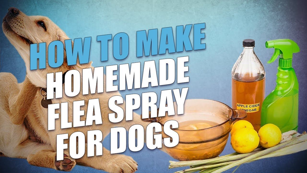 DIY Homemade Flea Spray for Dogs (Cheap and Natural)