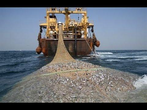 世界上最大的捕鱼船:造价高达4亿元,一网鱼几辈子都吃不完