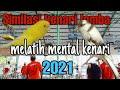 Simulasi Lomba Kenari Vidio Untuk Melatih Mental Kenari Gacor Simulasi Kenari Kontes  Mp3 - Mp4 Download