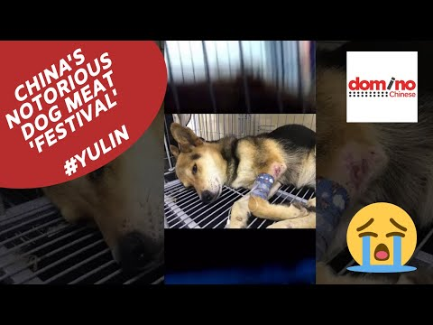 China's Notorious Dog Meat Festival In #Yulin. Warning: Disturbing Content! Chinese Dog Meat Trade