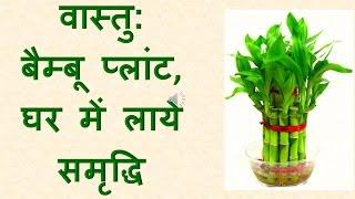 वास्तु:  बैम्बू प्लांट, घर में लाये समृद्धि : Bamboo plant , brought prosperity to the house