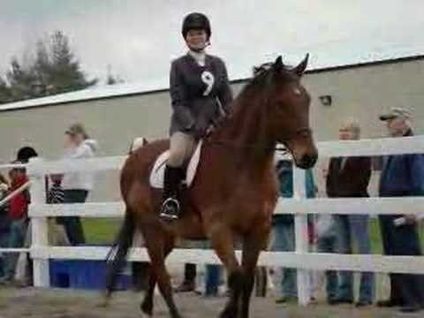 Alfred University Equestrian Center Youtube